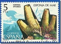 España - Fauna Invertebrados Esponja de Mar multicolor1
